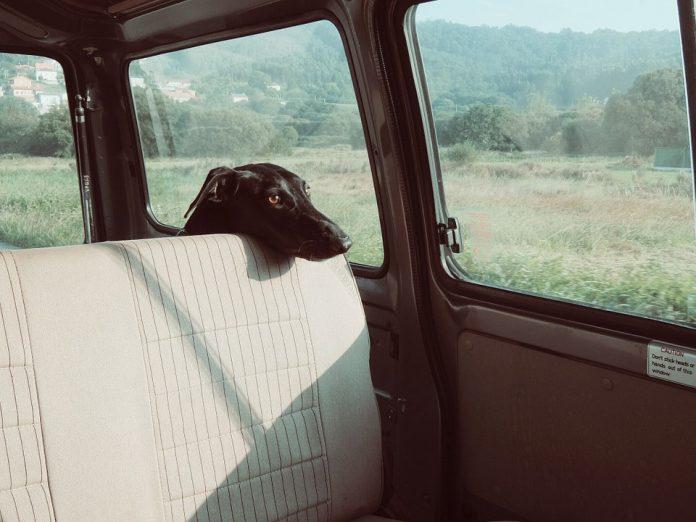 Cane-abbandonato-in-auto-torino